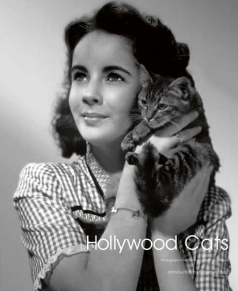 Hollywood Cats : Photographs From the John Kobal Foundation