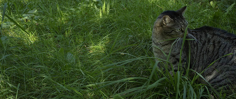 Buy Tomcat